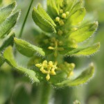 Crosswort at Boulby