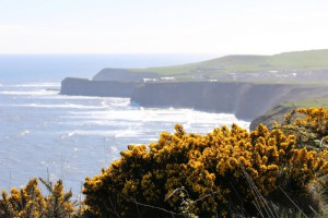 Gorse and Staithes